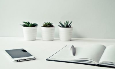 Модернизация сайтов CC0 License_https://www.pexels.com/photo/three-white-ceramic-pots-with-green-leaf-plants-near-open-notebook-with-click-pen-on-top-796602